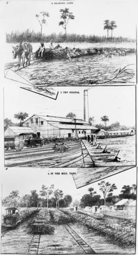 sketches of Mackay